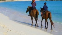Beach side horse riding