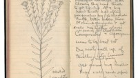 Thomas Edison's last scientific journal is the perfect collectible for geeks