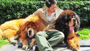 World's Most Expensive Dog Sells for $2 Million USD